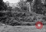 Image of jungle warfare training Canungra Australia, 1943, second 3 stock footage video 65675038652