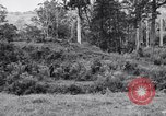 Image of jungle warfare training Canungra Australia, 1943, second 10 stock footage video 65675038652