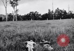 Image of jungle warfare training Canungra Australia, 1943, second 8 stock footage video 65675038653