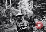 Image of jungle warfare training Canungra Australia, 1943, second 5 stock footage video 65675038654