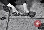 Image of Turtle race Detroit Michigan USA, 1934, second 12 stock footage video 65675038945