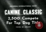 Image of Westminster Kennel Club Dog Show event New York United States USA, 1963, second 1 stock footage video 65675039116