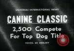 Image of Westminster Kennel Club Dog Show event New York United States USA, 1963, second 3 stock footage video 65675039116