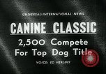 Image of Westminster Kennel Club Dog Show event New York United States USA, 1963, second 4 stock footage video 65675039116