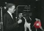 Image of Westminster Kennel Club Dog Show event New York United States USA, 1963, second 10 stock footage video 65675039116