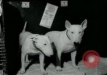 Image of Westminster Kennel Club Dog Show event New York United States USA, 1963, second 12 stock footage video 65675039116