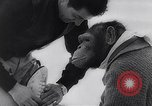 Image of chimp Germany, 1963, second 11 stock footage video 65675039148