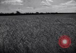 Image of wheat field Moscow Russia Soviet Union, 1941, second 6 stock footage video 65675039430