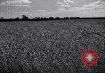 Image of wheat field Moscow Russia Soviet Union, 1941, second 7 stock footage video 65675039430
