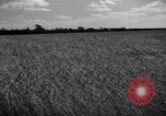 Image of wheat field Moscow Russia Soviet Union, 1941, second 8 stock footage video 65675039430