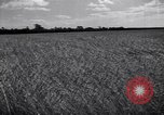 Image of wheat field Moscow Russia Soviet Union, 1941, second 9 stock footage video 65675039430