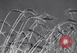 Image of wheat field Moscow Russia Soviet Union, 1941, second 10 stock footage video 65675039430