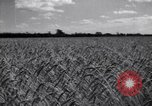 Image of wheat field Moscow Russia Soviet Union, 1941, second 12 stock footage video 65675039430