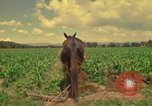 Image of farmer Mexico, 1975, second 1 stock footage video 65675039461