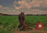 Image of farmer Mexico, 1975, second 2 stock footage video 65675039461