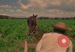 Image of farmer Mexico, 1975, second 4 stock footage video 65675039461