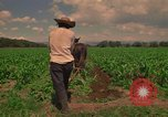 Image of farmer Mexico, 1975, second 6 stock footage video 65675039461