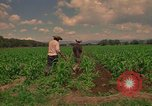 Image of farmer Mexico, 1975, second 9 stock footage video 65675039461