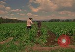 Image of farmer Mexico, 1975, second 10 stock footage video 65675039461