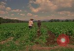 Image of farmer Mexico, 1975, second 11 stock footage video 65675039461