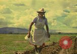Image of farmer Mexico, 1975, second 1 stock footage video 65675039462