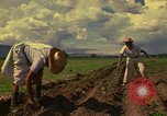 Image of farmer Mexico, 1975, second 5 stock footage video 65675039462