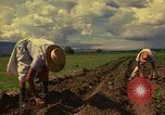 Image of farmer Mexico, 1975, second 8 stock footage video 65675039462