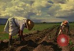 Image of farmer Mexico, 1975, second 9 stock footage video 65675039462