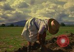 Image of farmer Mexico, 1975, second 12 stock footage video 65675039462