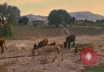 Image of man Mexico, 1975, second 2 stock footage video 65675039467