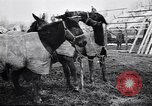 Image of American encampment World War I Europe, 1918, second 7 stock footage video 65675039656