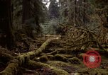 Image of Olympic rain forest Olympia Washington USA, 1966, second 1 stock footage video 65675039732