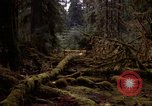 Image of Olympic rain forest Olympia Washington USA, 1966, second 2 stock footage video 65675039732