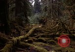 Image of Olympic rain forest Olympia Washington USA, 1966, second 3 stock footage video 65675039732