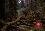 Image of Olympic rain forest Olympia Washington USA, 1966, second 4 stock footage video 65675039732