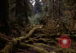 Image of Olympic rain forest Olympia Washington USA, 1966, second 5 stock footage video 65675039732