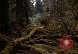 Image of Olympic rain forest Olympia Washington USA, 1966, second 7 stock footage video 65675039732