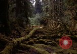 Image of Olympic rain forest Olympia Washington USA, 1966, second 8 stock footage video 65675039732