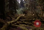 Image of Olympic rain forest Olympia Washington USA, 1966, second 9 stock footage video 65675039732