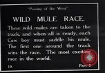 Image of wild mule race United States USA, 1927, second 1 stock footage video 65675039852