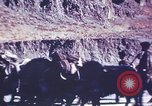 Image of Captain Brooke Dolan Lhasa Tibet, 1943, second 6 stock footage video 65675039988