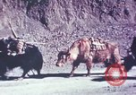 Image of Captain Brooke Dolan Lhasa Tibet, 1943, second 10 stock footage video 65675039988