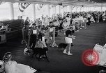 Image of dog show Asbury Park New Jersey USA, 1957, second 6 stock footage video 65675040132
