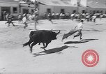 Image of bull fighting Alcochete Portugal, 1953, second 8 stock footage video 65675040157