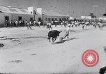 Image of bull fighting Alcochete Portugal, 1953, second 9 stock footage video 65675040157