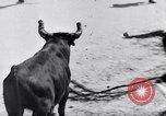 Image of bull fighting Alcochete Portugal, 1953, second 12 stock footage video 65675040157