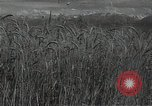 Image of wheat field Russia, 1941, second 2 stock footage video 65675040204