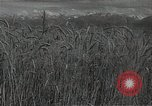 Image of wheat field Russia, 1941, second 4 stock footage video 65675040204
