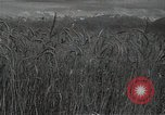 Image of wheat field Russia, 1941, second 5 stock footage video 65675040204