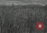 Image of wheat field Russia, 1941, second 6 stock footage video 65675040204